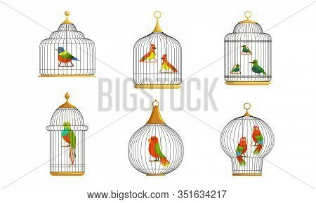 Colorful Parrots In Cages Collection, Cute Birds In Birdcages Vector Illustration On White Backgroun