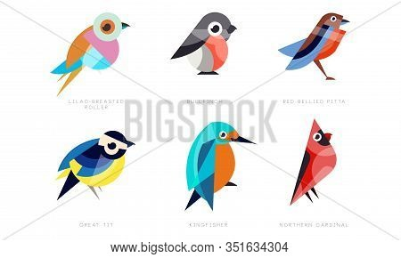 Colorful Stylized Birds Collection, Lilac Breasted Roller, Bullfinch, Red Bellied Pitta, Great Tit,
