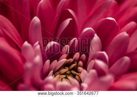 Red Daisy Flower Petals In Bloom, Abstract Floral Blossom Art Background, Flowers In Spring Nature F