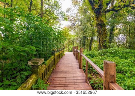 Wooden Tourist Path At Doi Inthanon National Park, Thailand. Beautiful Place In Tropical Rainforest