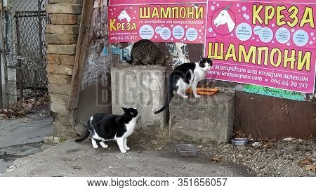 Belgrade, Serbia - January 24, 2020: Three Stray Black-and-white And Striped Cats Received A Portion