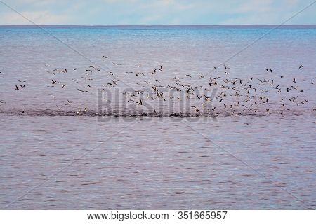 Watching Flock Of Dolfins And Many Seagulls, Coastline Of La Palma Island, Canary, Spain, Wildlife S