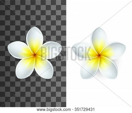 Plumeria Tropical Flowers 3d Vector Of Exotic Flowering Plants. Realistic Blossom Of Hawaiian Frangi