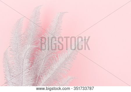 Gentle Simple Decorative Border Of Silver Fern Branches With Copy Space On Pastel Pink Background, T
