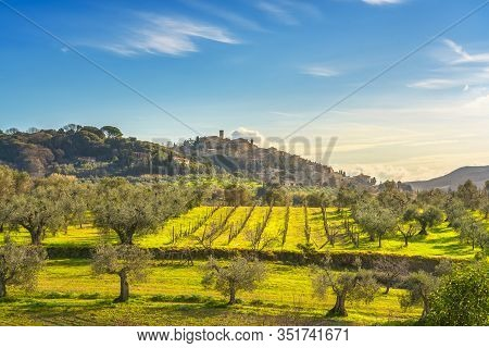 Casale Marittimo Village, Olive Trees And Vineyards, Countryside Landscape In Maremma. Pisa Tuscany,