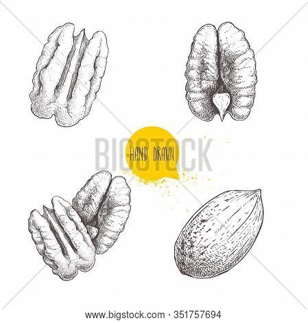 Pecan Nuts Set. Peeled Core And Whole Shell. Hand Drawn Sketch Style Vector Collection. Organic Exot