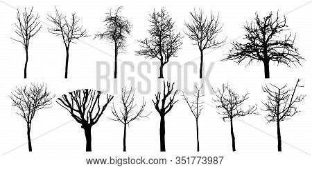 Bare Different Trees, Set Of Silhouettes. Vector Illustration.