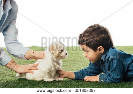 Cropped View Of Mother Holding Havanese Puppy And Son Looking At It Isolated On White