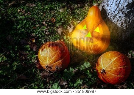 Pumpkins Group At The Farmland During Sunny Autumn Day. Haloween Mockup Concept.