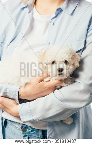 Cropped View Of Woman In Shirt Holding Cute Havanese Puppy