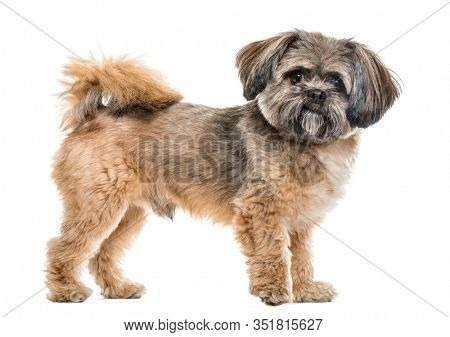 Side view of a cross-breed dog standing, isolated on white