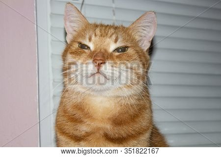 Red Cat Is Looking At The Camera. Pictures Of Cats, Cat's Eyes, Cute Cat, Drawings Of Cats, Drawings
