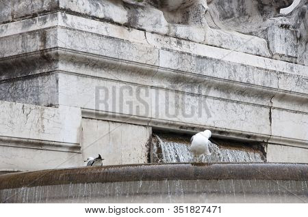 Fusion Of Water And Architecture. Seagulls And Water Spouting Into Stone Basin. Gulls On Ancient Fou