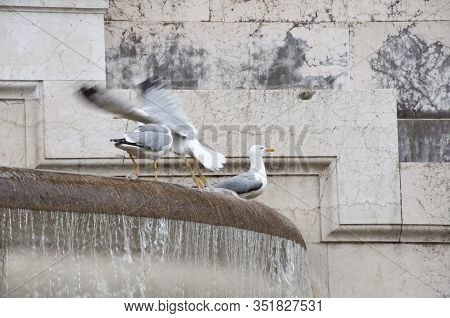 Beauty And Power. Seagulls And Water Spouting Into Stone Basin. Using Water In Architecture. Sea Gul