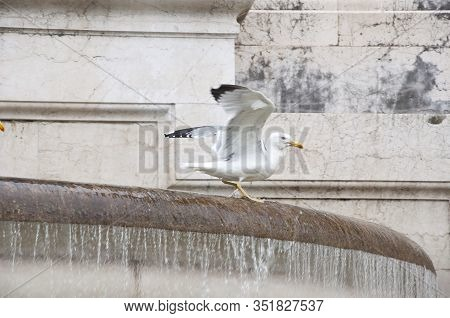 Using Water In Architecture. Seagulls And Water Spouting Into Stone Basin. Sea Gulls On Ancient Foun
