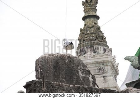 Natural And Built Beauty. Sea Gull On Stone Monument. Gull Sit On Architectural Monument. Historical