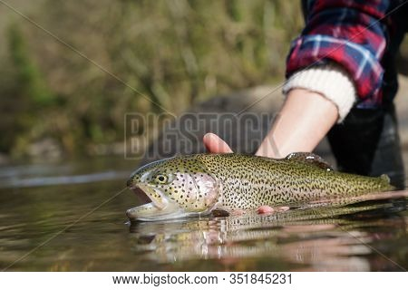 catch of a rainbow trout with a fly in the river