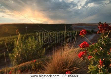 The Temecula, California countryside is a beautiful landscape at sunset.  This is a popular travel destination in the middle of wine country.