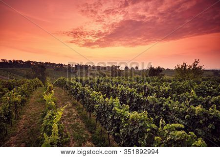 Vineyard At Sunset With Dramatic Sky, Moravia, Czechia