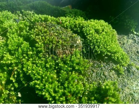 Mosses (bryophyte) On Rocks, They Are Characteristically Limited In Size And Prefer Moist Habitats.