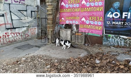 Belgrade, Serbia - January 24, 2020: Three Stray Cats Received A Portion Of Dry Cat Food From Kind P