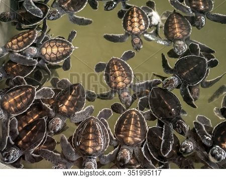 Closeup Photo Of Lots Of Small Newborn Turtles In Water Tank At Wildlife Rescue Center