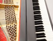 Detailed interior of grand piano showing the strings pegs sound board with focus on part of image and keys poster