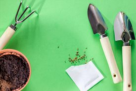 Seeds Of Greens In A Flowerpot At Home. Garden Tools For Pot Plants: Shovels And Rake. Spring Garden