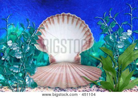 Ocean Shell Scene