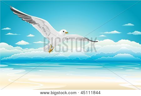 Flying seagull on Beach