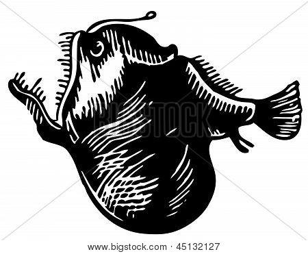 Leftvent Anglerfish