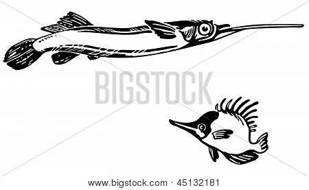 Fish Dermogenys pusillus and Naso unicornis