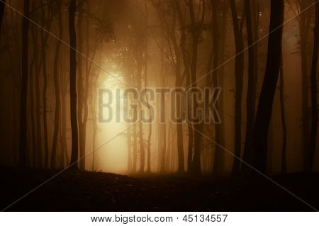 Dark forest with fog in autumn with light shining trough