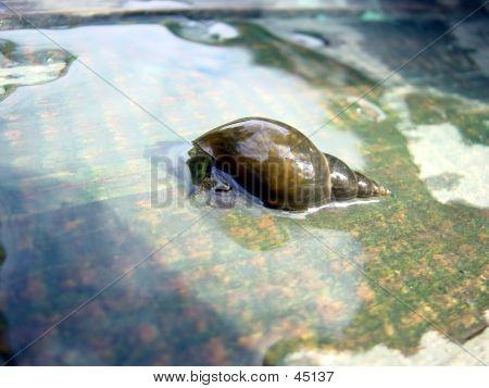 Wet Snail