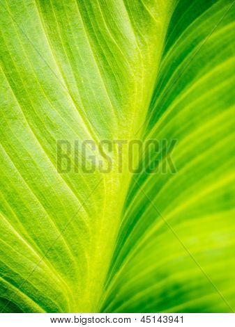 Green Plant Background
