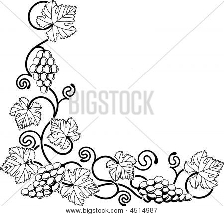 Grape Vine Design Element