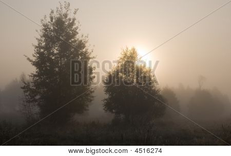 Birch Trees In Misty Morning With Sun Sphere