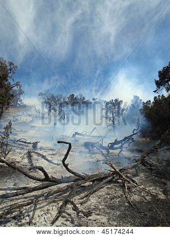 Smoking Brush Fire