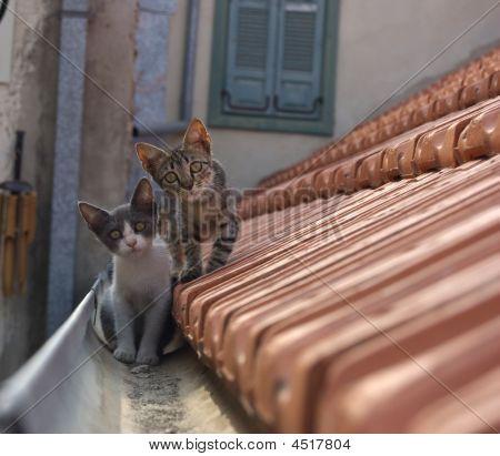 Kittens On Roof