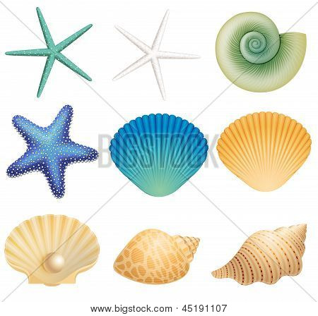 Sea Shells and Sea Star