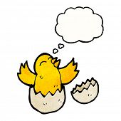 hatching chick with thought bubble poster