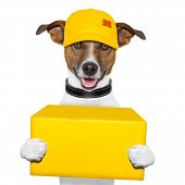 dog delivery yellow post box with cap poster