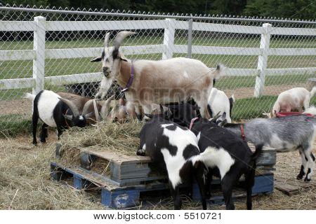 Barnyard Breakfast