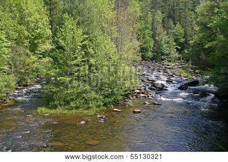Scenic Forested River