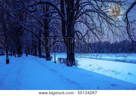 Hoarfrost On A Winter Night
