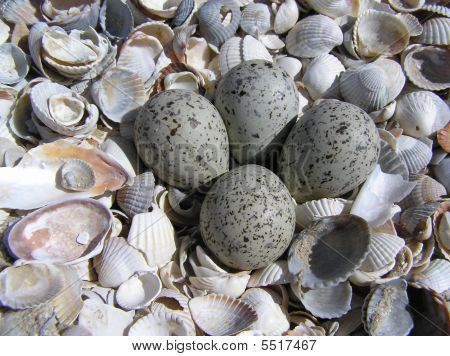 Bird's nest at a beach with shells (more close view) poster