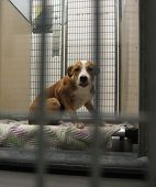 a dog in a local shelter (focus on the paw) shot at high ISO  poster