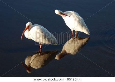 Ibis Reflection Double