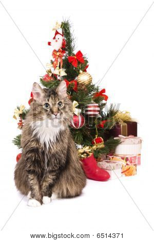 Cat By Christmas Tree. Year Of Tiger