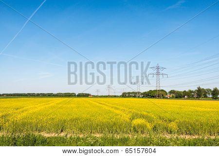 Yellow Flowering Rapeseed Plants In Springtime